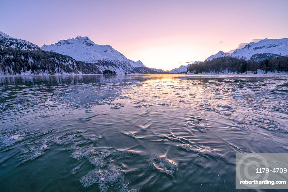 Tree branches trapped in ice under the frozen surface of Lake Sils at sunset, canton of Graubunden, Engadine, Switzerland