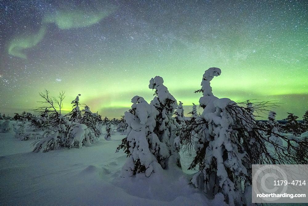 Winter forest covered with snow under the green Northern Lights, Pallas-Yllastunturi National Park, Muonio, Lapland, Finland
