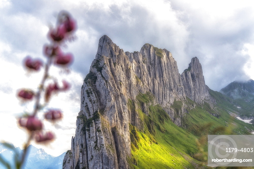 Majestic rock face of Saxer Lucke mountain framed by flowers in bloom, Appenzell Canton, Alpstein Range, Switzerland, Europe