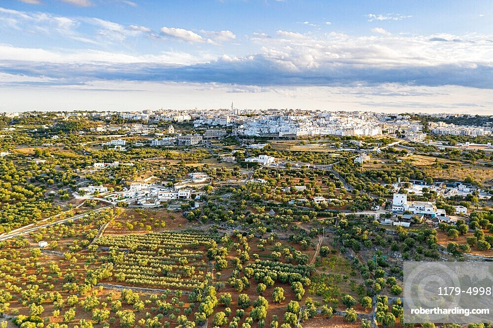 Aerial view of Ostuni old town surrounded by olive groves, province of Brindisi, Salento, Apulia, Italy, Europe