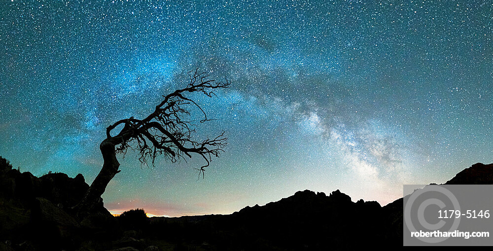 Bare tree under the Milky Way arch in the starry sky over Pico Ruivo mountain, Madeira, Portugal