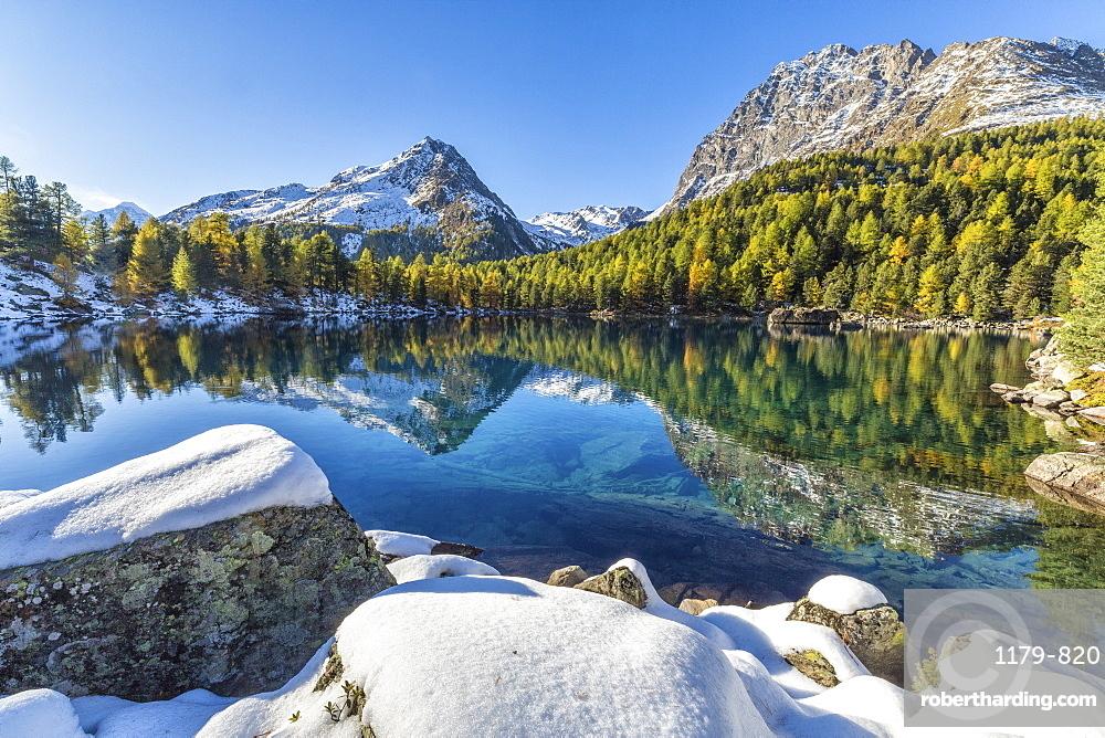 Colorful woods and snowy peaks reflected in Lake Saoseo, Poschiavo Valley, Canton of Graubunden, Swizterland, Europe