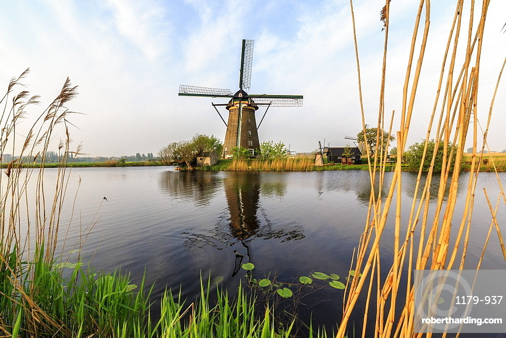 Green grass and reed beds frame the windmills reflected in the canal Kinderdijk, Rotterdam, South Holland, Netherlands, Europe