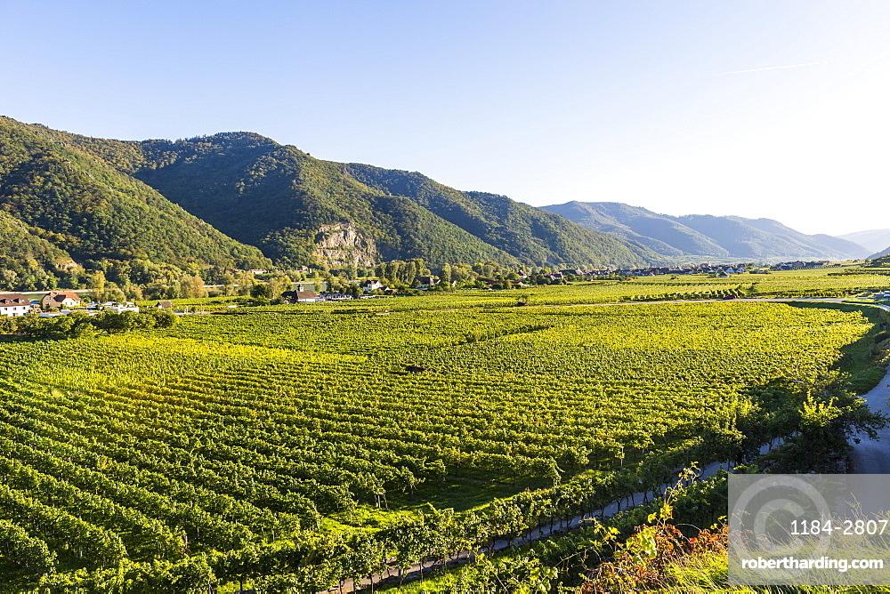 Vineyards in Weissenkirchen on the Danube, Wachau, UNESCO World Heritage Site, Austria, Europe