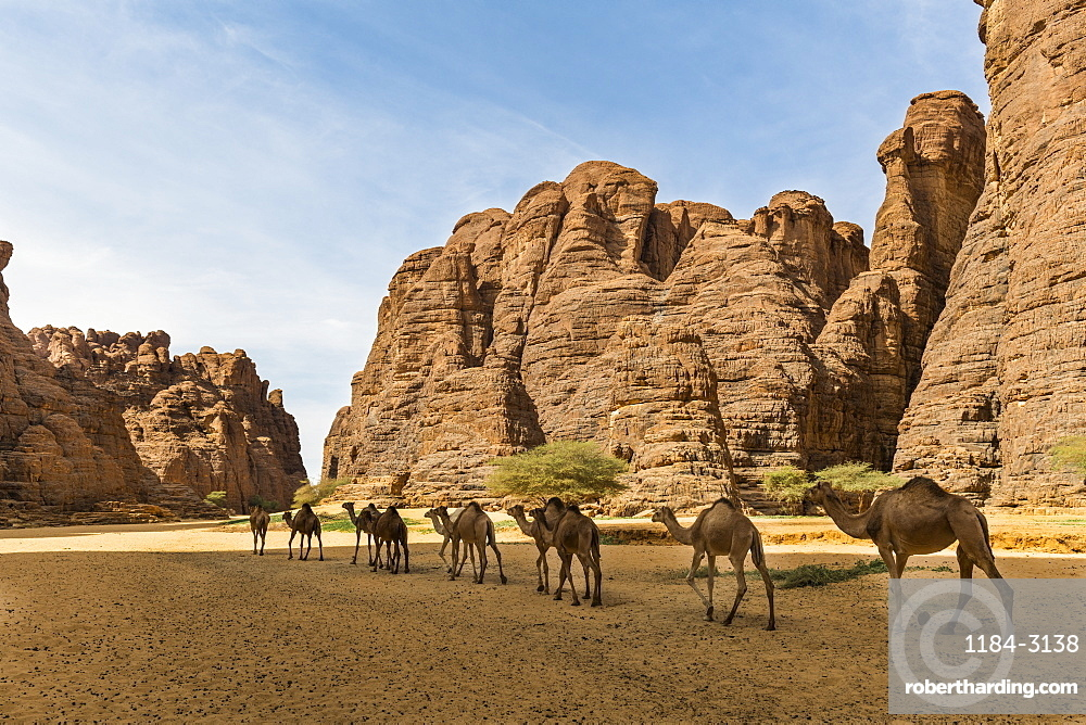 Animals at a waterhole in a rock amphitheatre, Ennedi Plateau, UNESCO World Heritage Site, Ennedi region, Chad, Africa