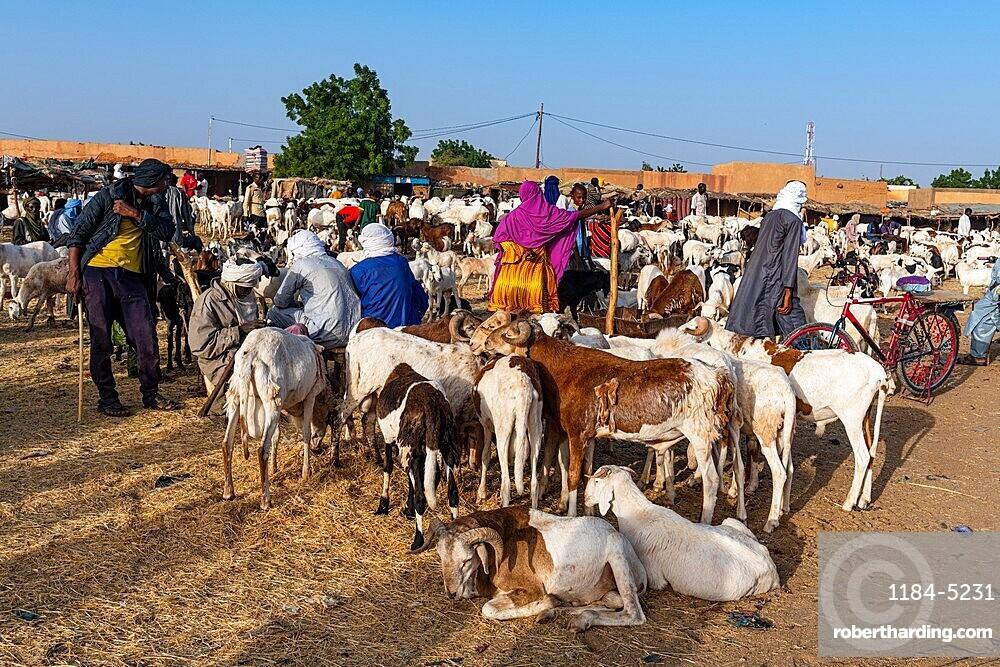 Animal market, Unesco world heritage site Agadez, Niger