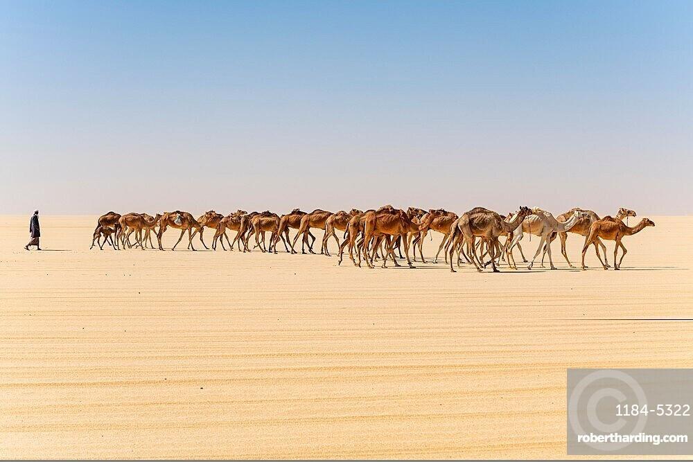 Camel carawan in the Djado Plateau, Niger