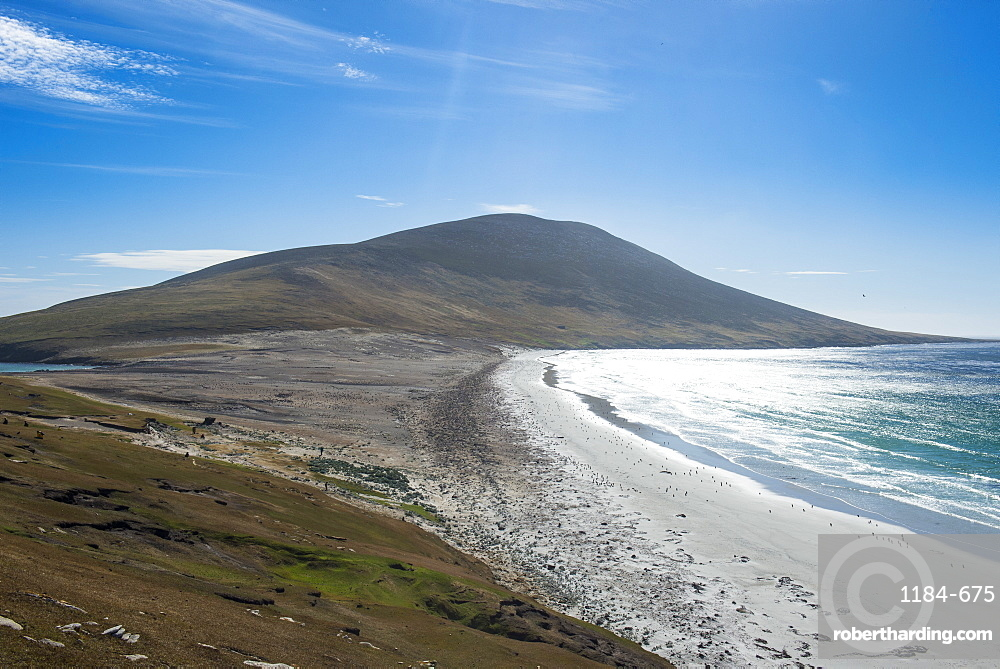 The Neck isthmus on Saunders Island, Falklands, South America