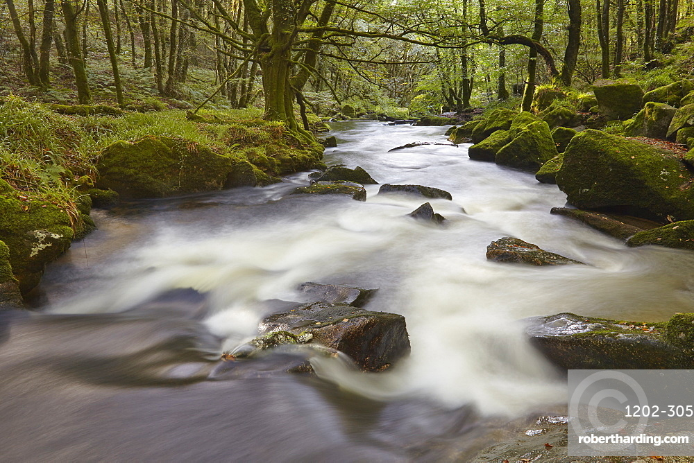 The River Fowey, flowing through woodland and over Golitha Falls, on the southern slopes of Bodmin Moor, near Liskeard, Cornwall, England, United Kingdom, Europe