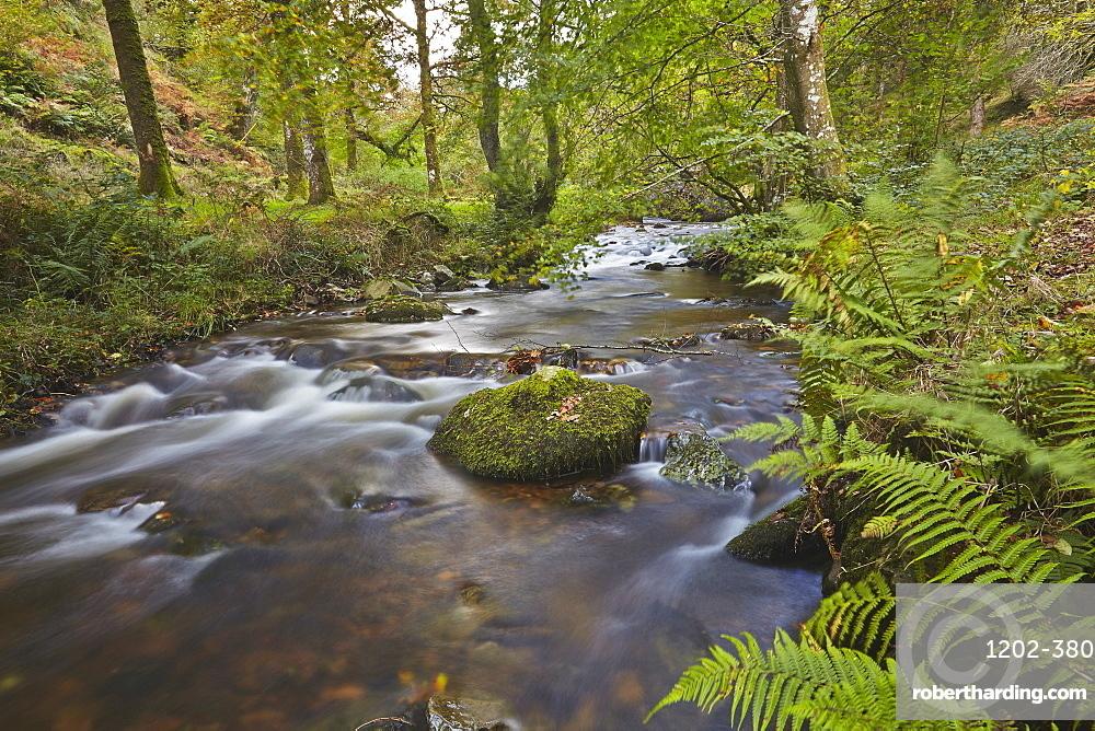 Horner Wood and Horner Water, at Pool Bridge, near Porlock, in Exmoor National Park, Somerset, Great Britain.