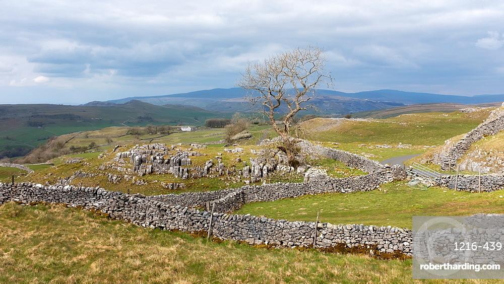 Landscape with dry stone walls, Yorkshire, England, United Kingdom, Europe