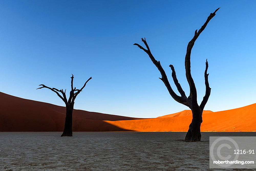 Deadvlei, Namibia, Africa