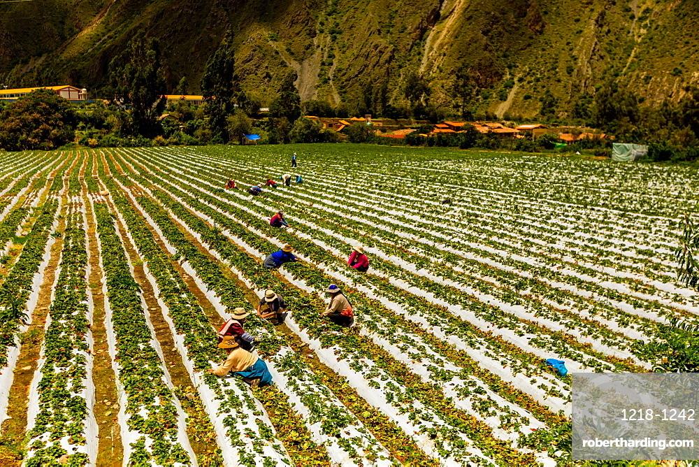 Farmland at El Albergue next to Peruvian mountains, Peru, South America