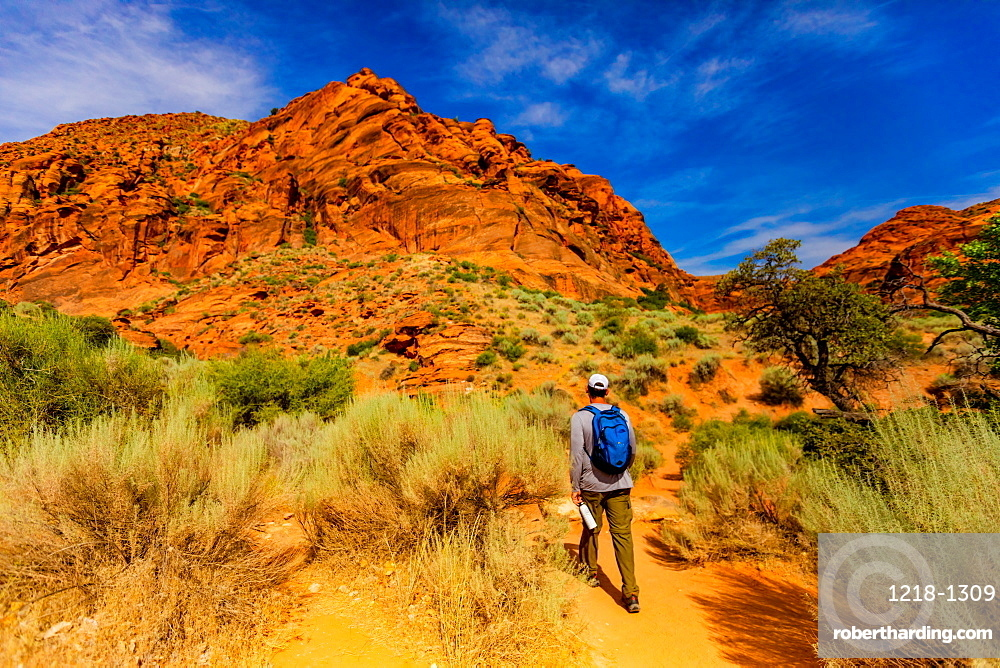 Man hiking along the Red Reef Trail, Red Cliffs National Conservation Area, Utah, United States of America, North America