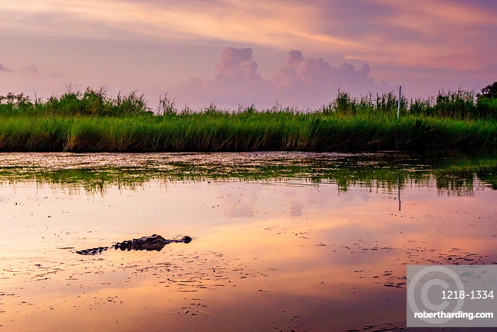 Alligator Alley is home to so many alligators in Louisiana that its impossible to not spot one.