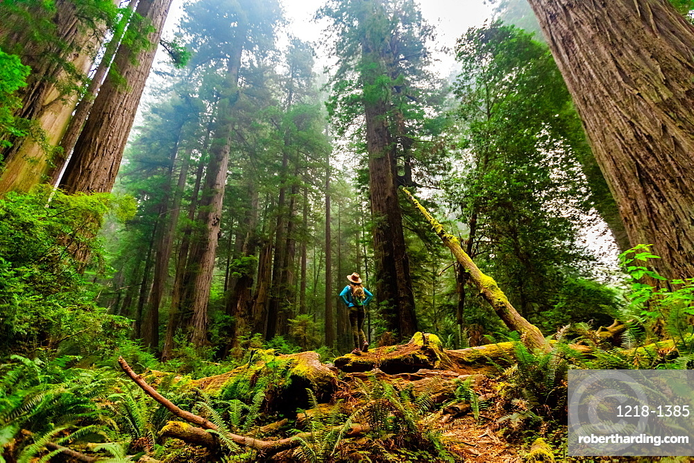 Woman exploring Mount Shasta Forest.