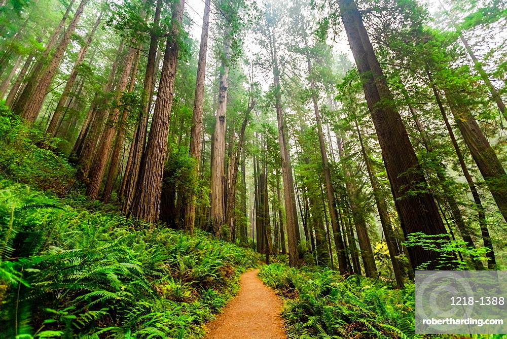 Mount Shasta Forest.