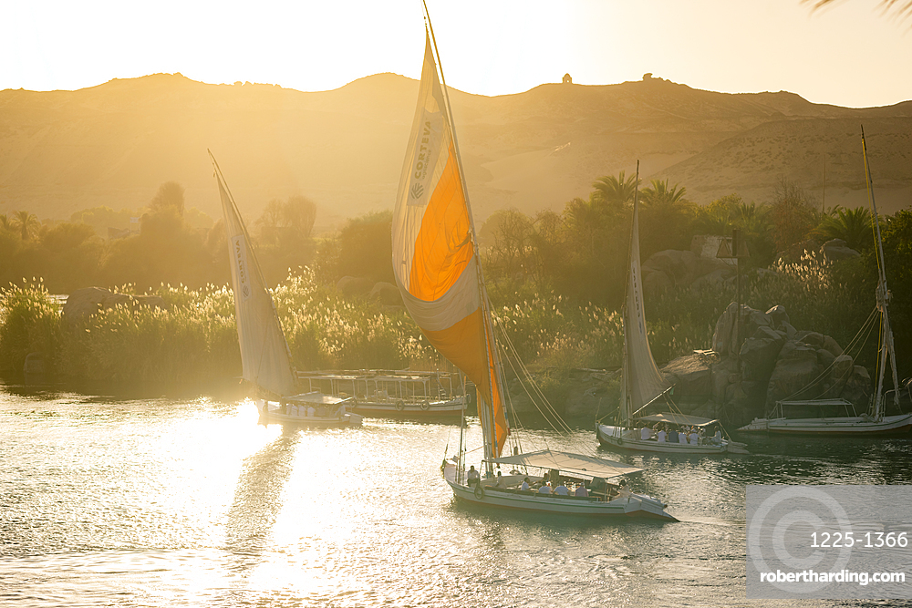 Traditional Felucca sailboats with wooden masts and cotton sails on the River Nile, Aswan, Egypt, North Africa, Africa