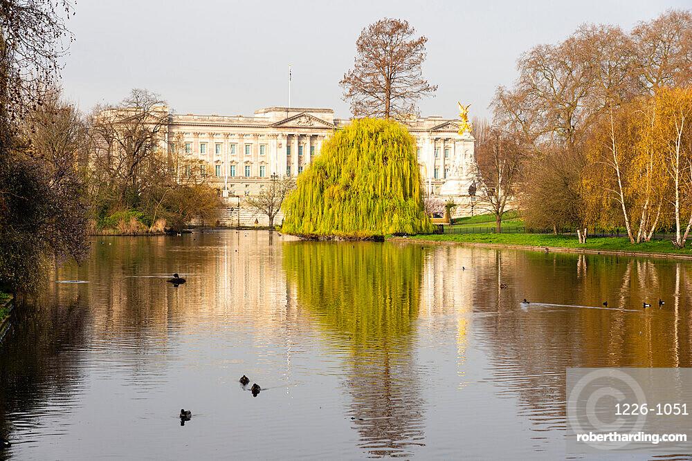 Buckingham Palace viewed from St. James's Park, London, England, United Kingdom, Europe