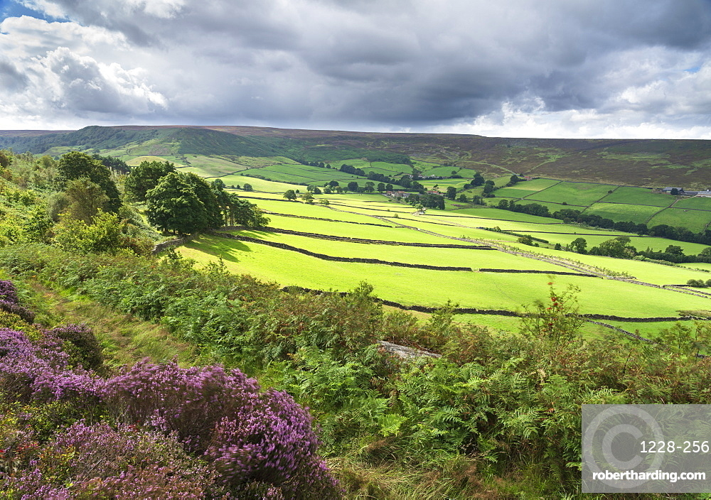 Late summer sunlight on Stonebeck Gate Farm, Little Fryup Dale, The North Yorkshire Moors National Park, UK.