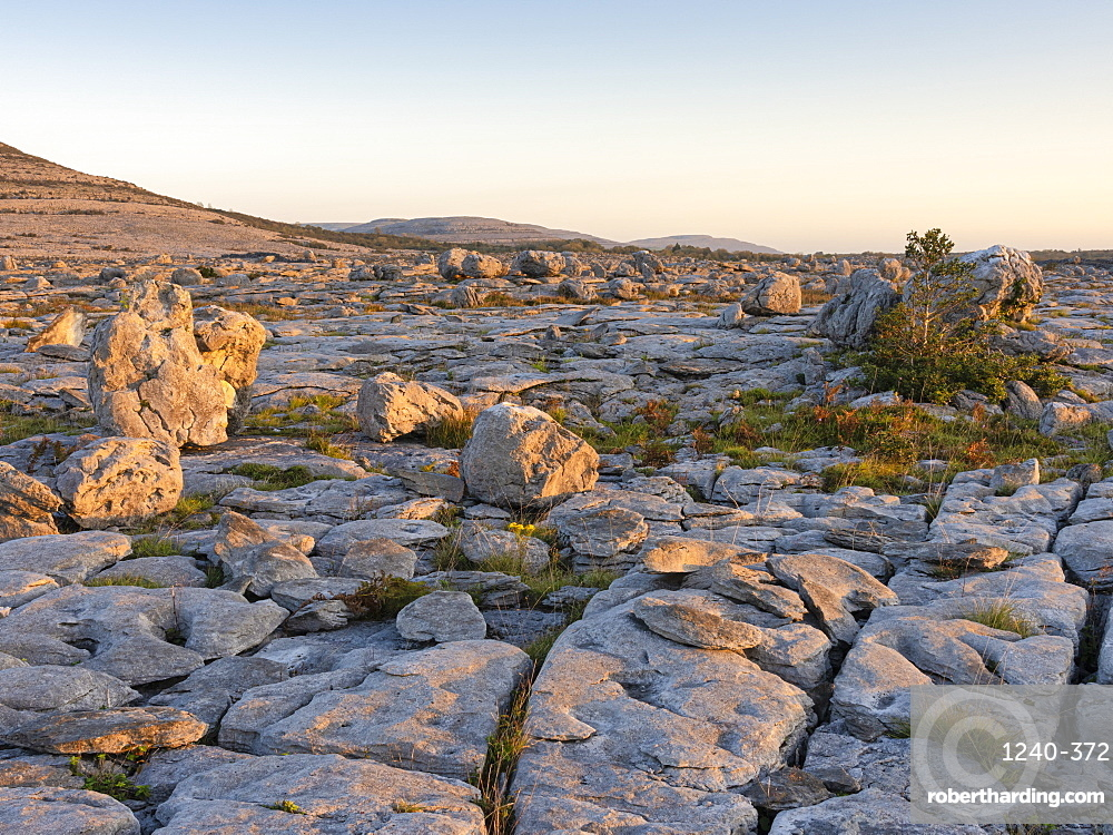 Rockforest, The Burren, County Clare, Munster, Republic of Ireland, Europe