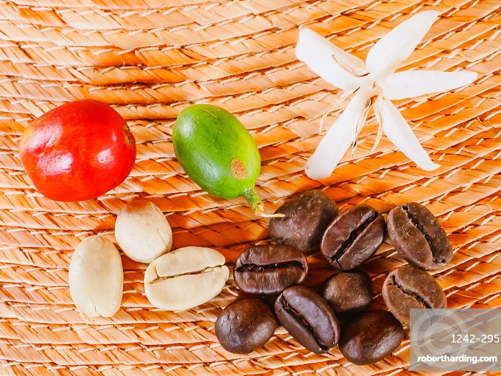 Coffee flower, ripe red coffee berry, unripe coffee berry, green coffee beans, and roasted coffee beans, Hacienda Guayabal, near Manizales, Coffee Region, Colombia, South America