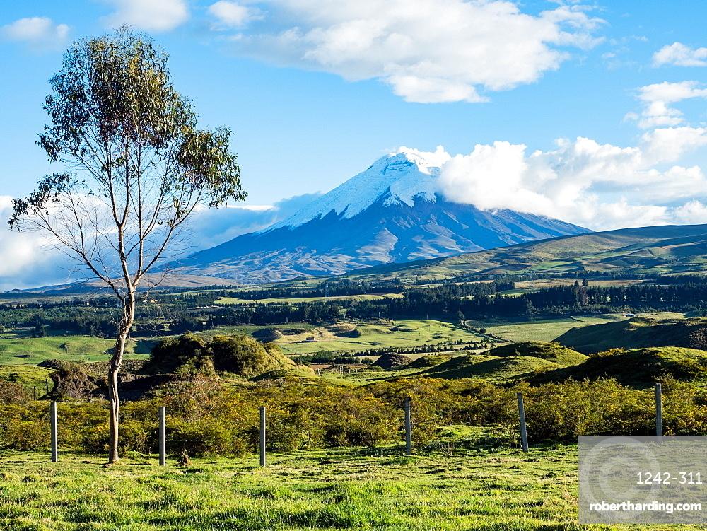 Green farmland and Cotopaxi volcano, Andes mountains, Ecuador, South America