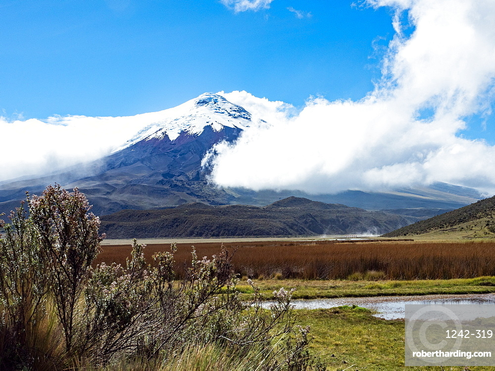Limpiopungo lake and Cotopaxi volcano, Cotopaxi National Park, Andes mountains, Ecuador, South America