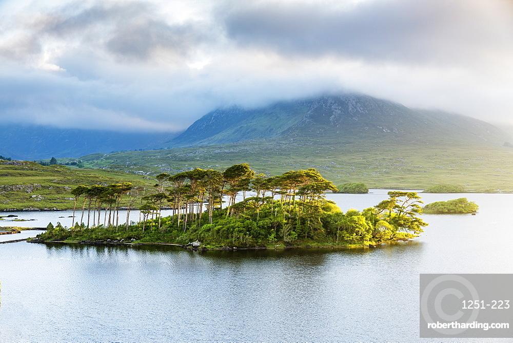 Pine Island on Derryclare Lake, Connemara, County Galway, Connacht province, Republic of Ireland, Europe