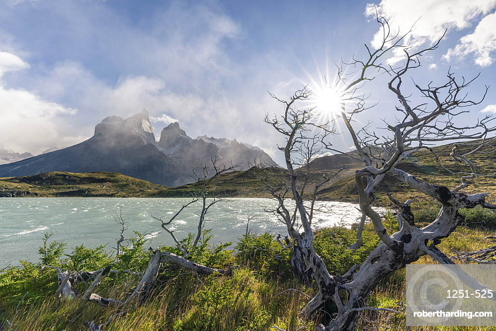 Dead trees with Lake Nordenskjold and Paine Horns in the background in autumn, Torres del Paine National Park, Chile, South America