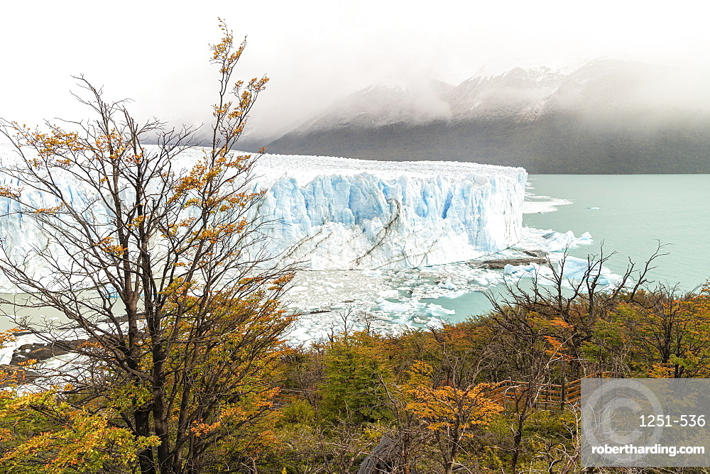 Perito Moreno with trees, Lago Argentino and mountains in autumn, Los Glaciares National Park, UNESCO World Heritage Site, Santa Cruz Province, Argentina, South America