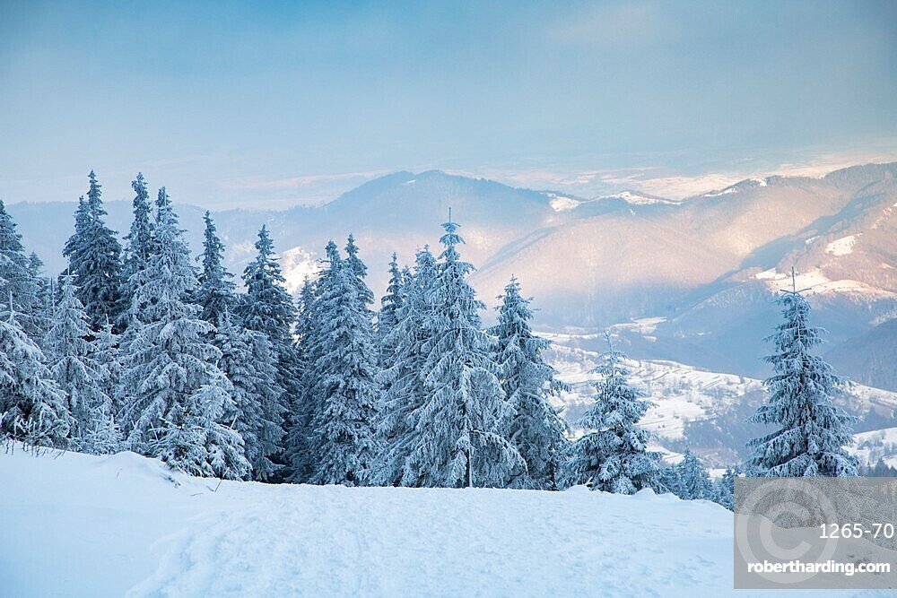 Beautiful winter landscape in Vladeasa mountains, Transylvania, Romania, Europe