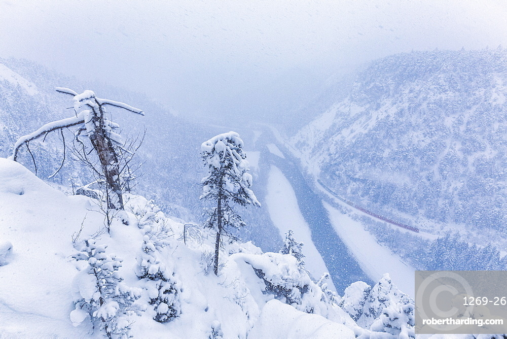 The Red Train travels in the Rhine Valley during a snowstorm, Rhein Gorge, Flims, Imboden, Graubunden, Switzerland, Europe