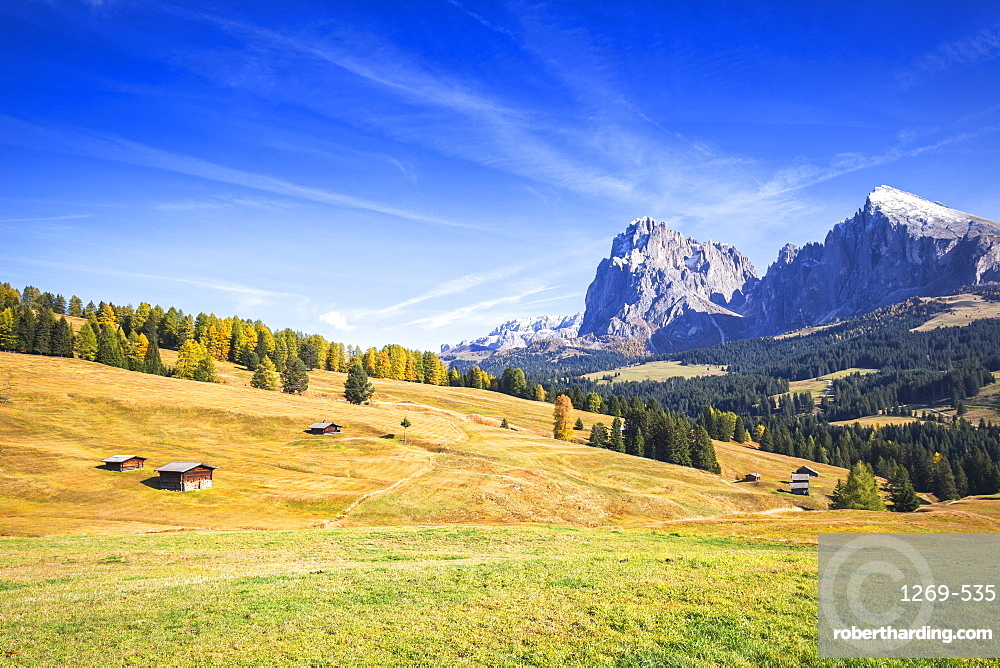 Autumn color at Seiser Alm. Seiser Alm, Dolomites, province of Bolzano, South Tirol, Italy, Europe.