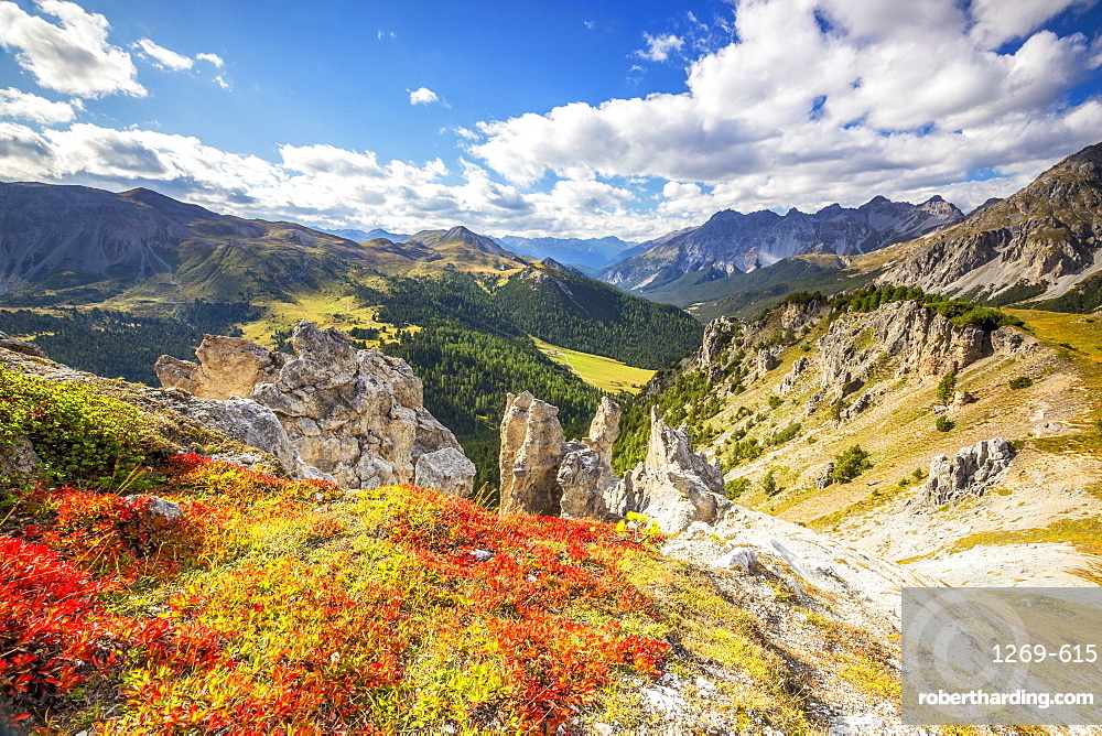 Blueberry leaves in autumn near rock towers in the Swiss National Park, Fuorn Pass, Engadine valley, Graubunden, Switzerland, Europe