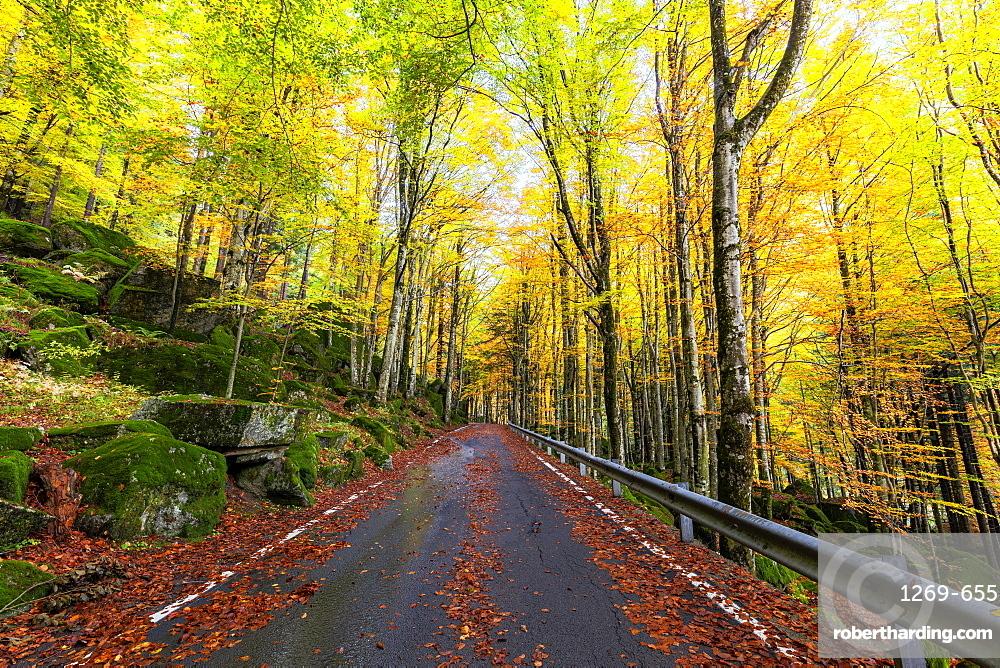Road in the forest of Bagni di Masino in autumn, Valmasino, Valtellina, Lombardy, Italy, Europe