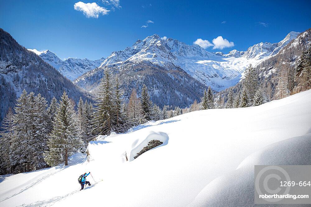 Young skier advances in the fresh snow, Chiareggio, Valmalenco, Valtellina, Lombardy, Italy, Europe
