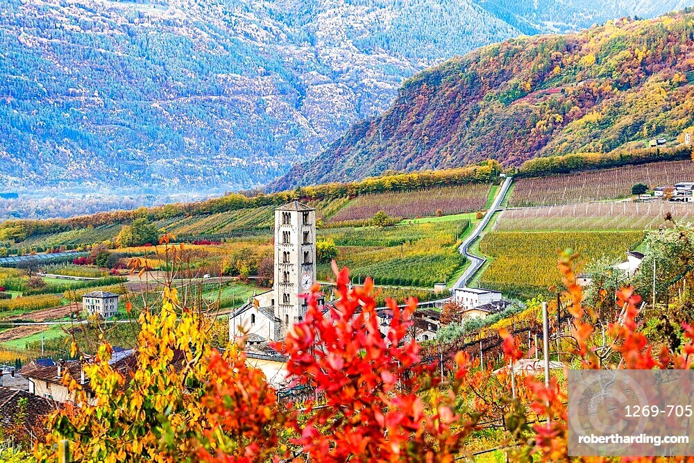 Rural church in the vineyards and apple orchards, Valtellina, Lombardy, Italy, Europe