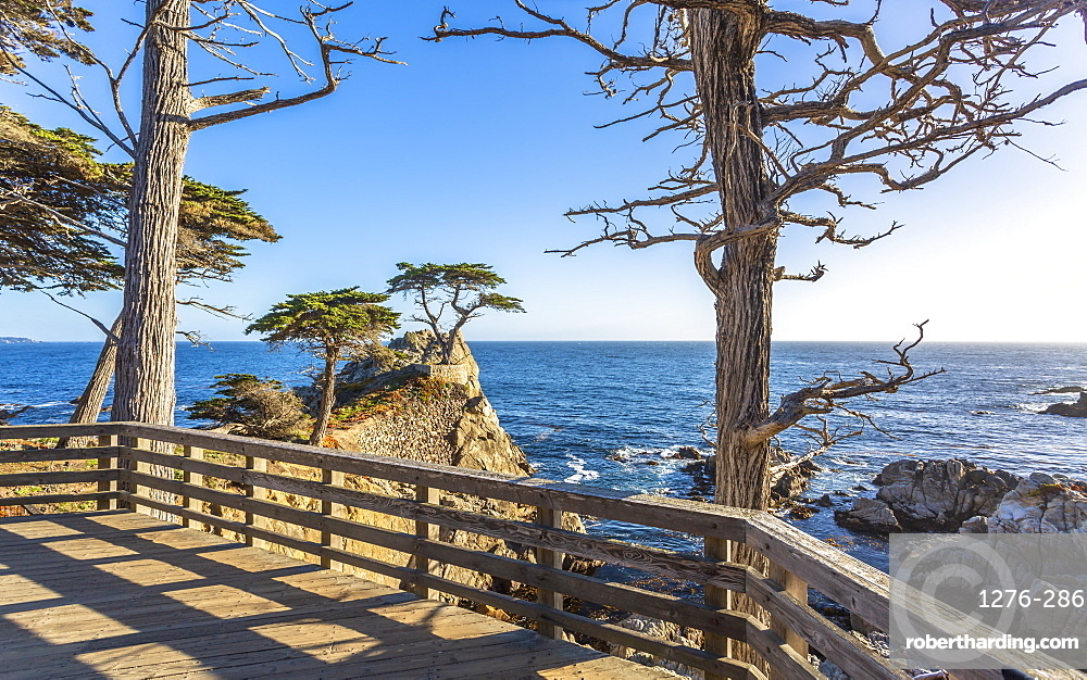 Carmel Bay, Lone Cypress at Pebble Beach, 17 Mile Drive, Peninsula, Monterey, California, United States of America, North America