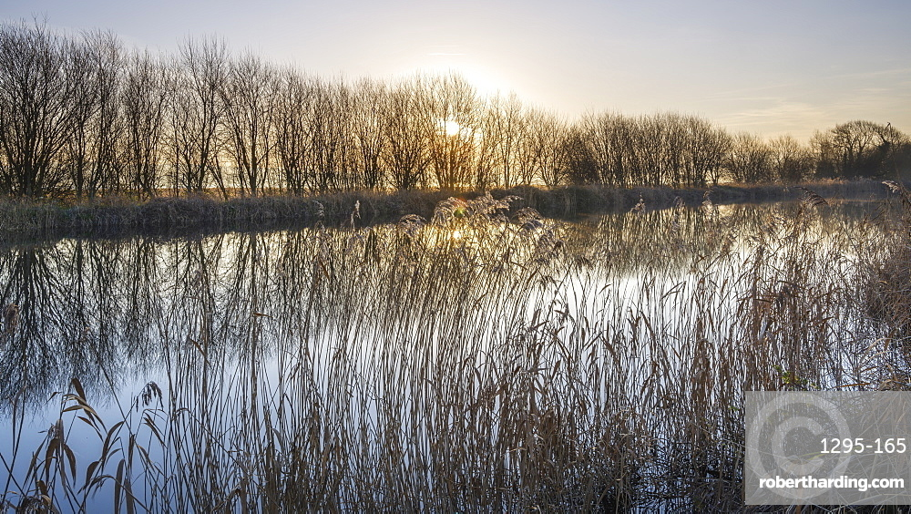 Trees and reeds in hazy winter sun on the Exeter Canal, Exeter, Devon, England, United Kingdom, Europe