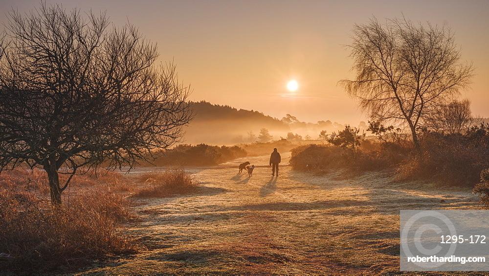 Winter sunrise dog walk in the mist on the heathland of Woodbury Common, near Exmouth, Devon, England, United Kingdom, Europe