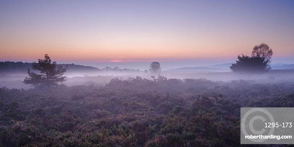Winter twilight with mist on the heathland of Woodbury Common, near Exmouth, Devon, England, United Kingdom, Europe