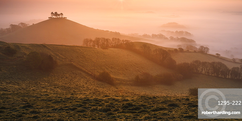 Misty sunrise over the distinctive pine topped Colmer's Hill near Bridport, Dorset, England, United Kingdom, Europe