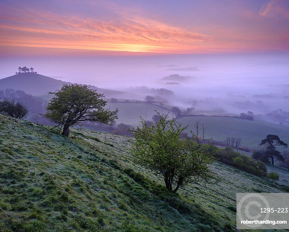 Misty dawn twilight over the distinctive pine topped Colmer's Hill near Bridport, Dorset, England, United Kingdom, Europe
