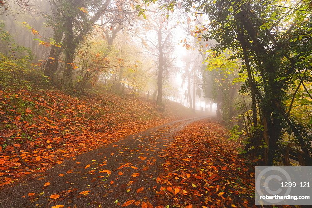 Atmospheric autumn road in Brescia Prealpi in autumn season, Brescia Province, Lombardy, Italy, Europe