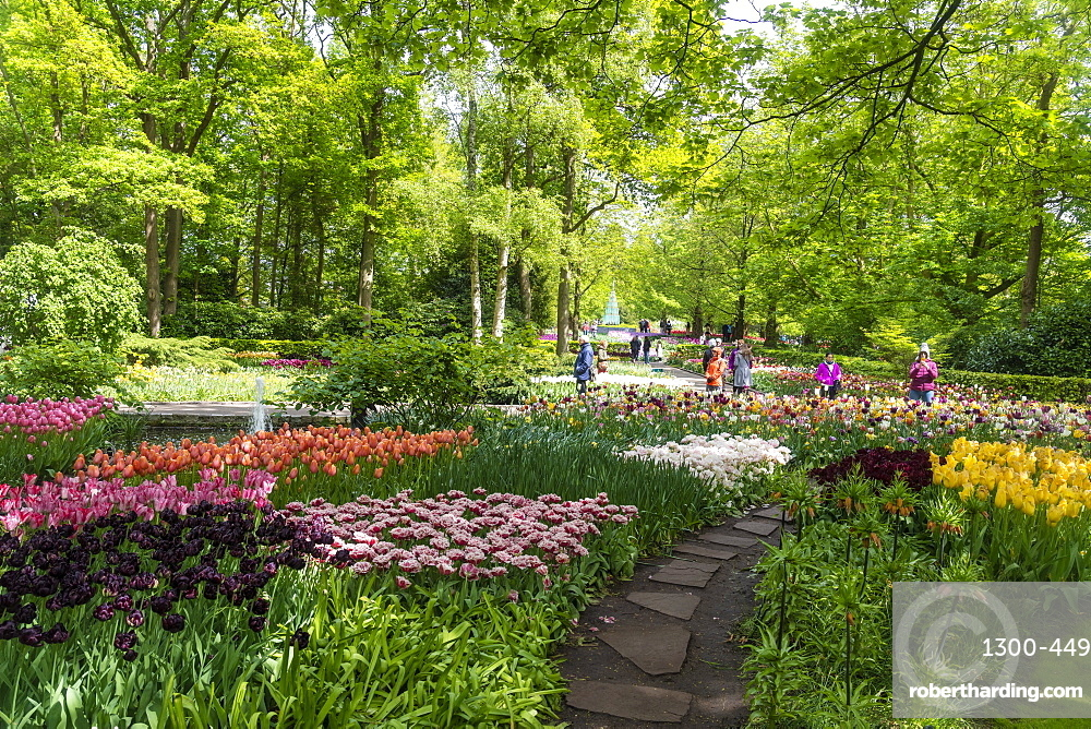 Tulip displays and flowers in Kuekenhof in Lisse, South Holland, The Netherlands, Europe