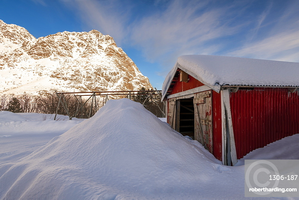 Red fishermans hut partially buried in large snow drift with cod racks and mountain backdrop, Lofoten, Arctic, Norway, Europe
