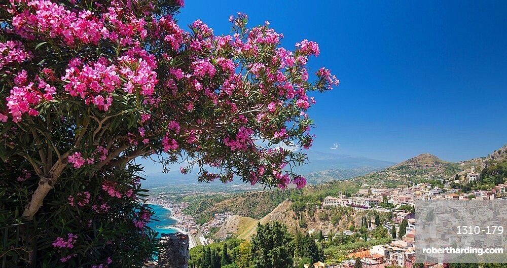 Panoramic view over the town from the Greek Theatre, pink oleander bush in foreground, Taormina, Messina, Sicily, Italy