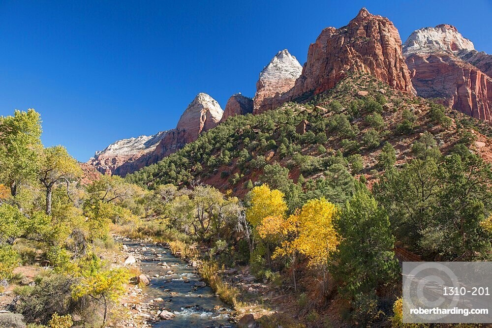 View along the Virgin River from Canyon Junction, autumn, golden cottonwood trees prominent, Zion National Park, Utah, United States of America, North America