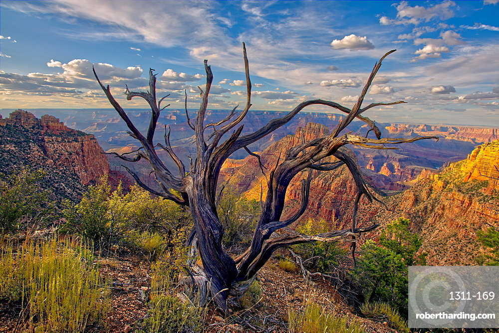 Grand Canyon view from the east slope of Buggeln Hill on the South Rim, Grand Canyon National Park, UNESCO World Heritage Site, Arizona, United States of America, North America